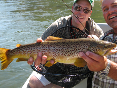 Blackfoot River Fly Fishing Brown Trout