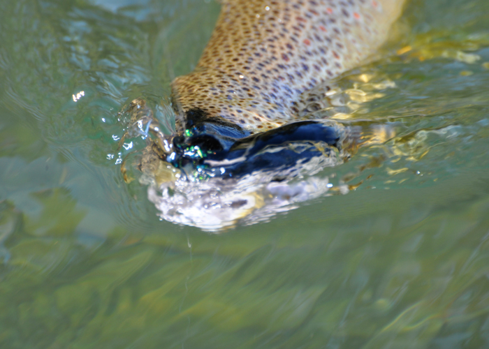 Bitterroot Guided Fly Fishing Trip - Fish On!