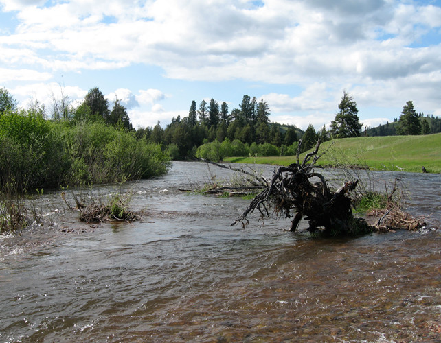 Blackfoot Guided Fly Fishing Trip River Scenic Day