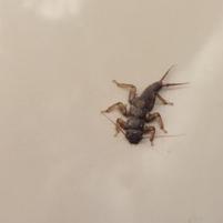 bug201x201
